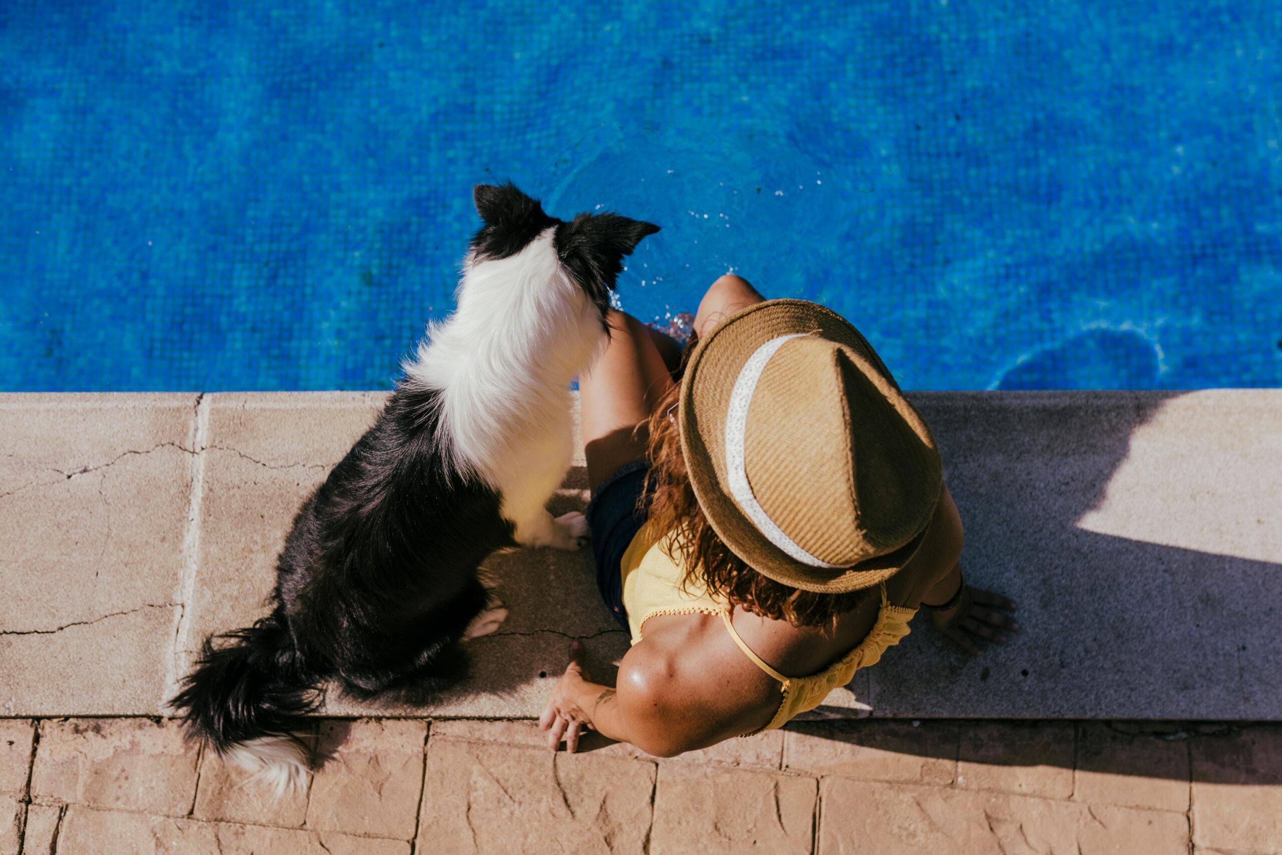 orlando pet friendly vacation rentals