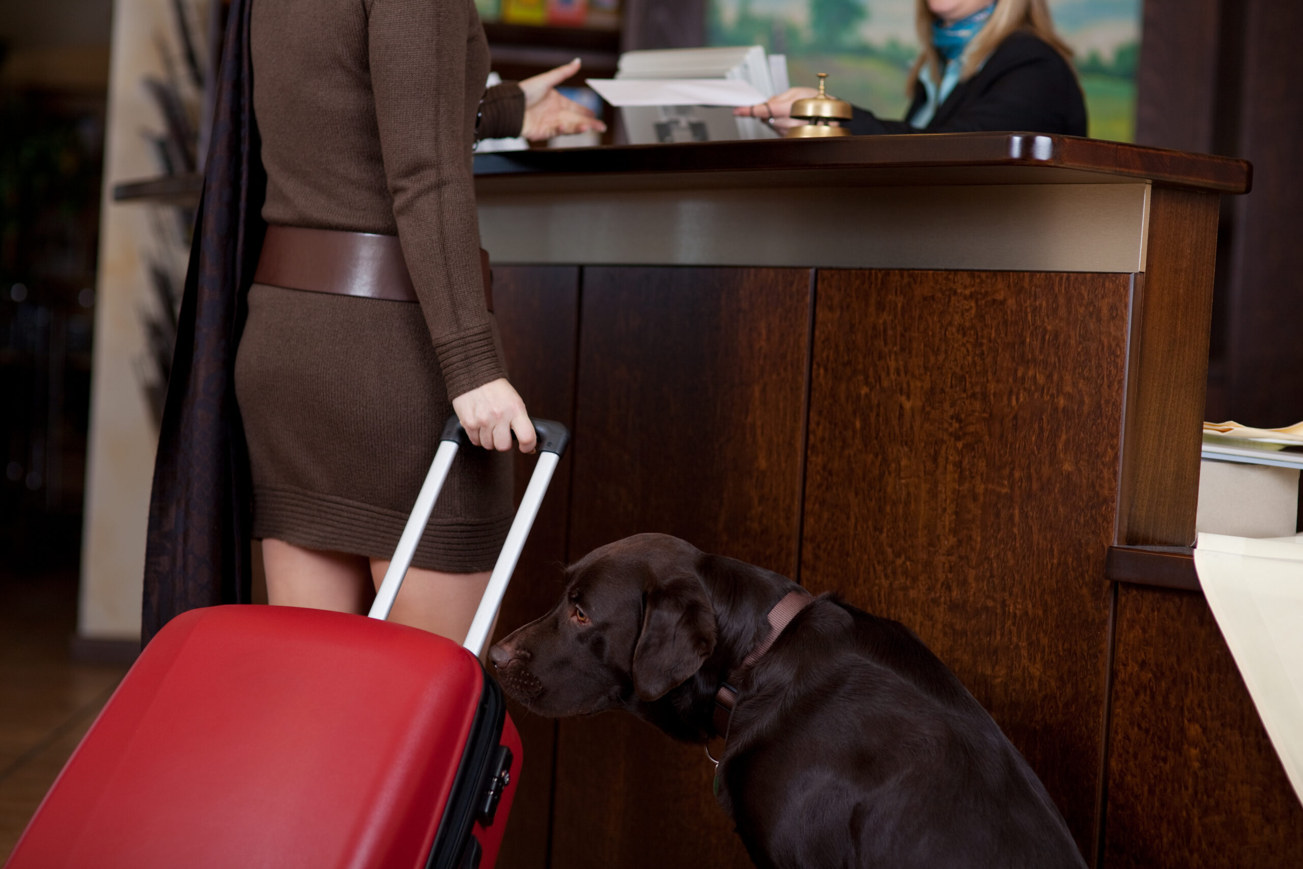 Pet friendly hotels orlando scaled